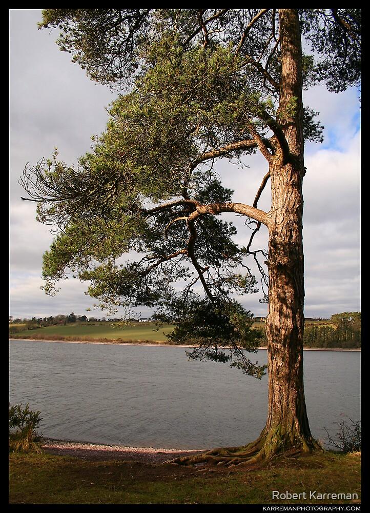 River tree [colour] by Robert Karreman