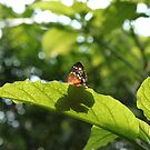 Butterflies are free by Elspeth  McClanahan