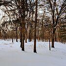 Winter Woods by ZeroAnd09
