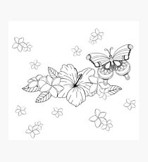 Just Add Colour - Tropical Butterfly Photographic Print