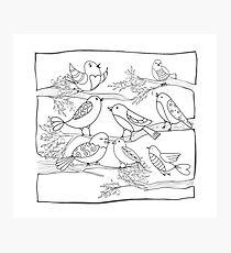 Just Add Colour - Birds of a Feather Photographic Print