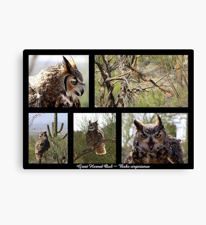 Great Horned Owl ~ Raptor Series Canvas Print