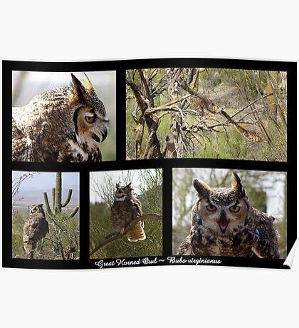 Great Horned Owl ~ Raptor Series Poster