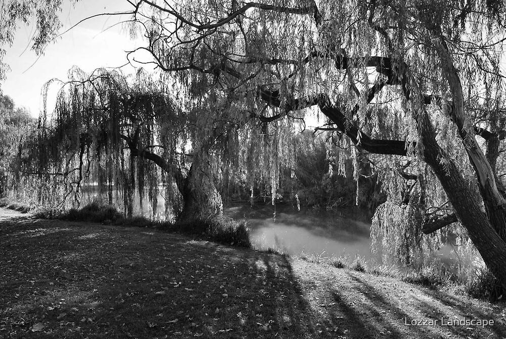 Willow Tree Sunshine by Lozzar Landscape