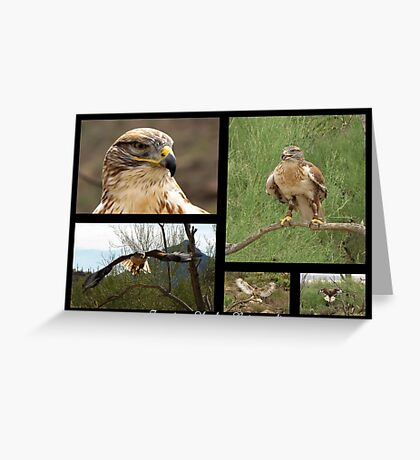 Ferruginous Hawk ~ Raptor Series Greeting Card