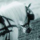 The Pony by Nancy Stafford