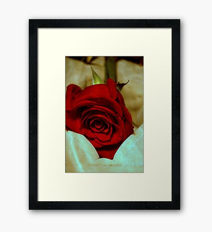 red rose in violin case © 2010 patricia vannucci  Framed Print
