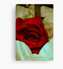red rose in violin case © 2010 patricia vannucci  Canvas Print