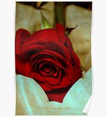 red rose in violin case © 2010 patricia vannucci  Poster
