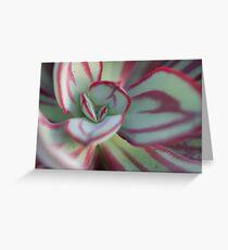 Echeveria nodulosa Greeting Card