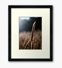 Dancing With The Light Framed Print