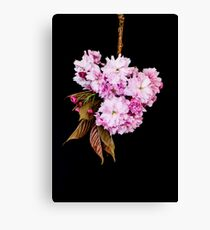 Cherry Blossoms still life on a black background Canvas Print