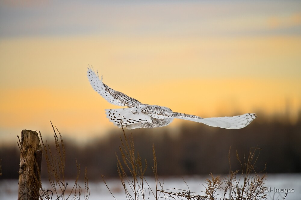Take Off by Owl-Images