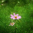 Flower by aunkurs