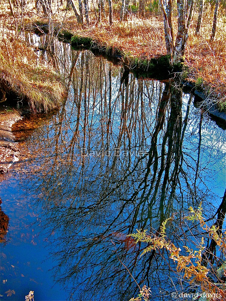 Reflections of a Tree by David Davies
