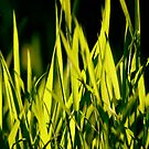 Leaves of Grass (for Walt Whitman) by Richard Pitman