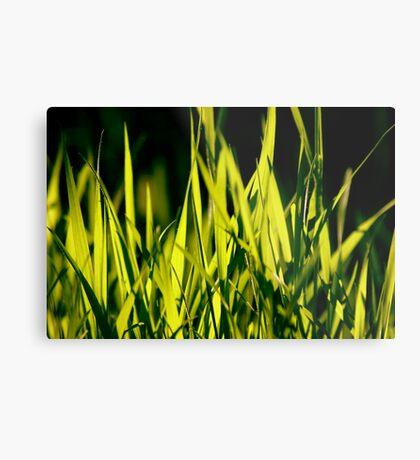Leaves of Grass (for Walt Whitman) Metal Print