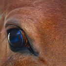 Up Close and Personal by Susan Blevins