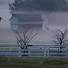 ghosts of the bluegrass - horses in the mist by John Carey