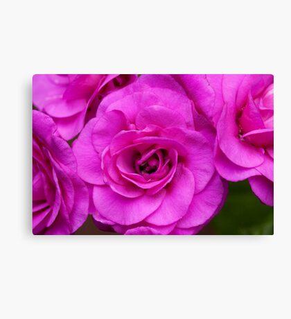 Very Pink Canvas Print