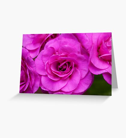 Very Pink Greeting Card