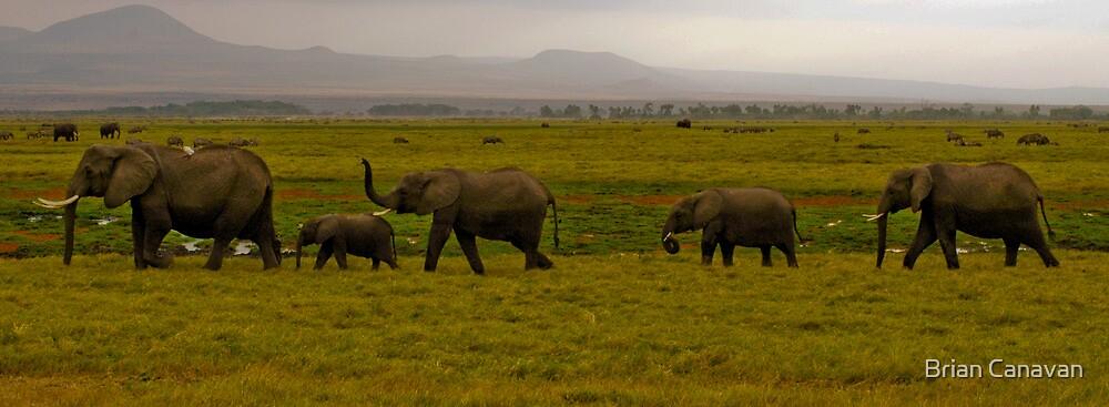 Elephant Patrol by Brian Canavan