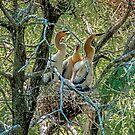 Junge Anhingas im Nest von TJ Baccari Photography