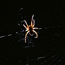 Sun Lit Spider.  by Nancy Stafford