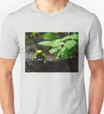 I'm frog. Who are you? Slim Fit T-Shirt