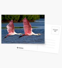 Two Spoonbills in Flight Postcards
