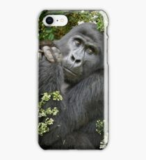 mountain gorilla, Uganda iPhone Case/Skin