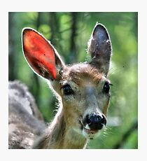 Oh My...What Big, Ears you Have!!! Photographic Print
