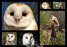 Barn Owl ~ Raptor Series by Kimberly Chadwick