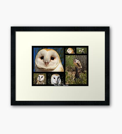 Barn Owl ~ Raptor Series Framed Print