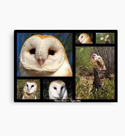 Barn Owl ~ Raptor Series Canvas Print