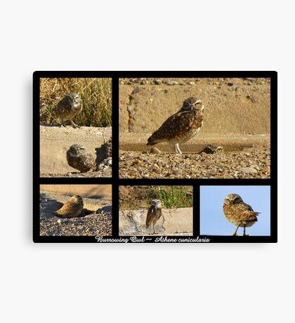 Burrowing Owl ~ Raptor Series Canvas Print
