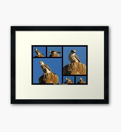 Merlin ~ Raptor Series Framed Print