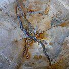Petrified Wood 3 by oscarcano