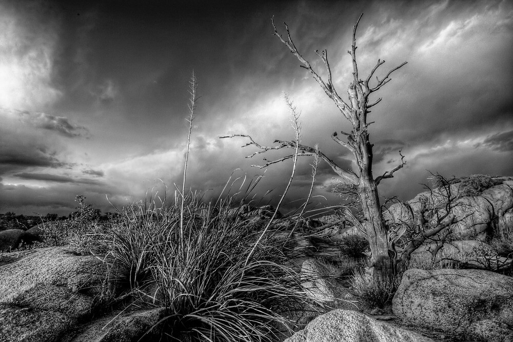 Tree Noir by Bob Larson