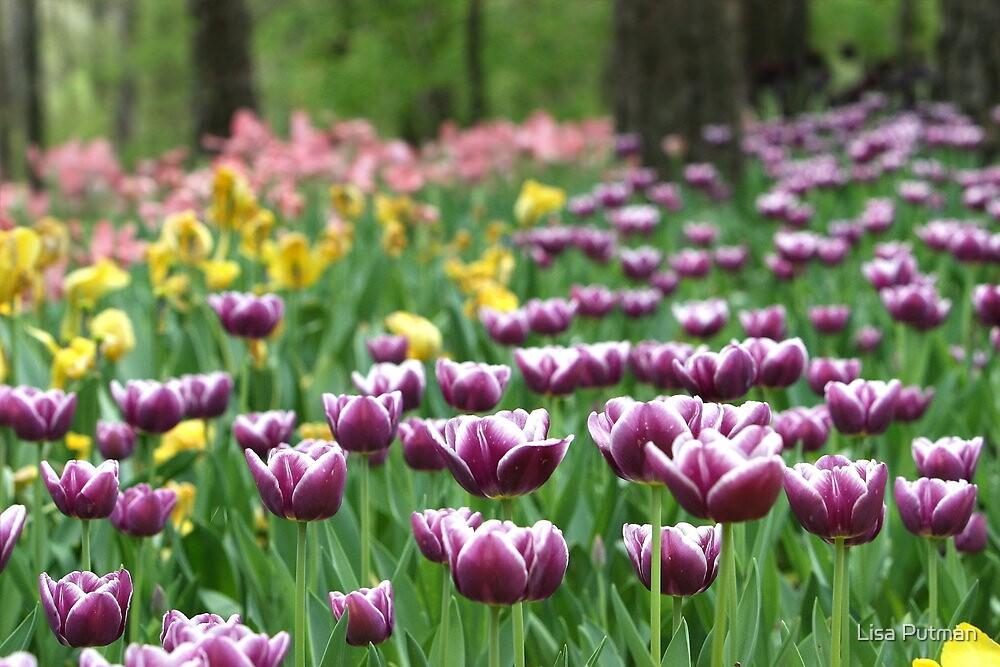 Springtime Melody I by Lisa G. Putman