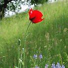 Poppy Dreams - by Heather Ross by Bo-Ross