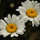 Daisy June - by Heather Ross by Bo-Ross