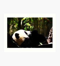 Panda, USA Art Print