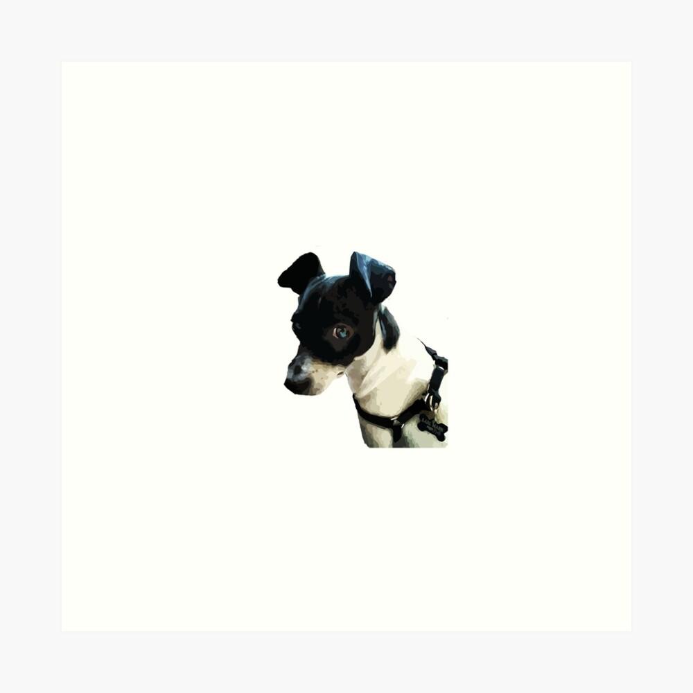 Carl the Rat Terrier Art Print