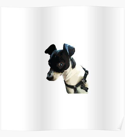 Carl the Rat Terrier Poster