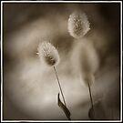 fluffy grass - doh! by Lorraine Seipel