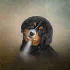 Zeichnungswelpe Berner Sennenhund von bonidog