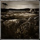 Bay of Fires Antique by Lorraine Seipel