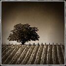 vineyard antique by Lorraine Seipel
