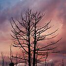 Tasmanian Nights 2 von Alex Preiss